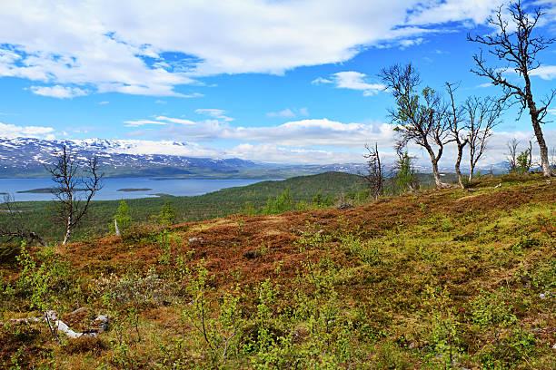 tundra lake, sweden - norrbotten bildbanksfoton och bilder