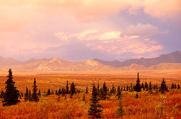 Tundra landscape Tundra landscape in autumn color high seat stock pictures, royalty-free photos & images