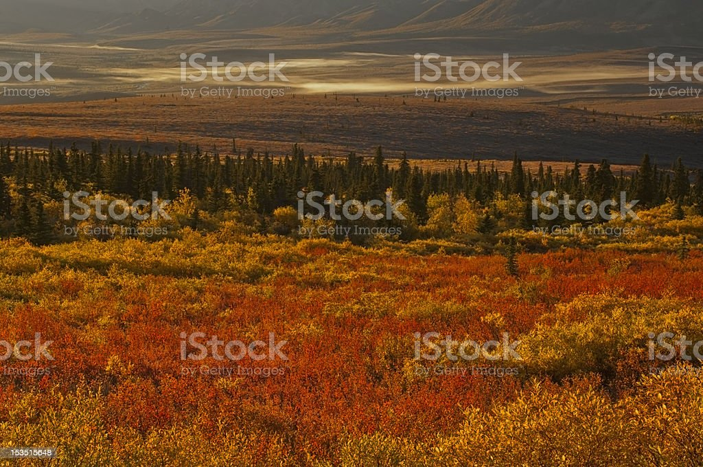 Tundra landscape stock photo