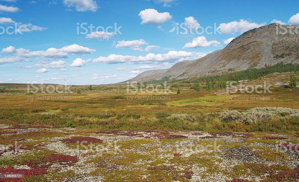 Tundra stock photo