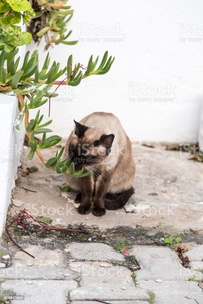 Tunisian cat stock photo