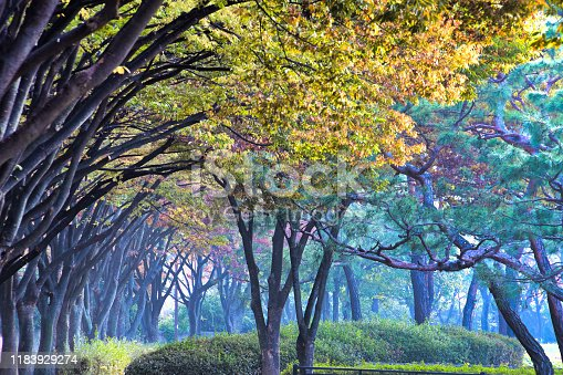 istock Tunnel Forest Morning VD702 1183929274