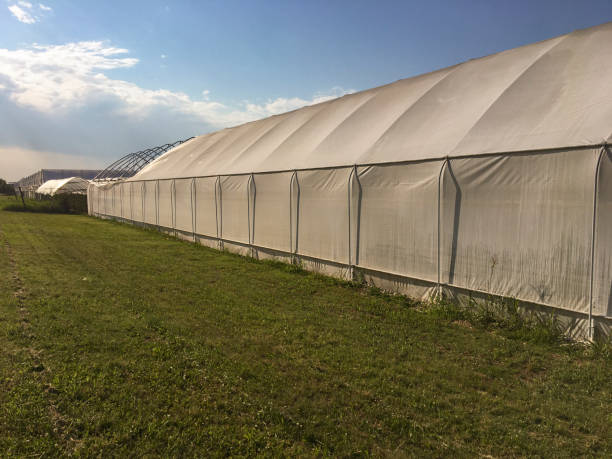 Tunnel greenhouses for wholesale agricultural production, stock photo