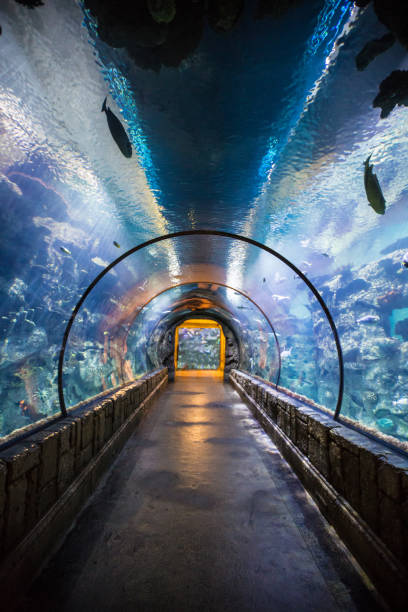 Tunnel inside an aquarium with many types of fish Tunnel inside an aquarium with many types of fish. An aquarium (plural: aquariums or aquaria) is a vivarium of any size having at least one transparent side in which aquatic plants or animals are kept and displayed. Fishkeepers use aquaria to keep fish, invertebrates, amphibians, aquatic reptiles such as turtles, and aquatic plants. The term