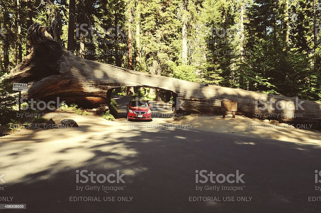 Tunnel Log in Sequoia National Park stock photo