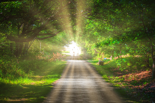 Green tunnel trough forest with a bright llight at the end of the tunnel, religion, belief, spiritiualty