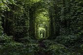Ukraine, Klevan, nature, forest, tunnel