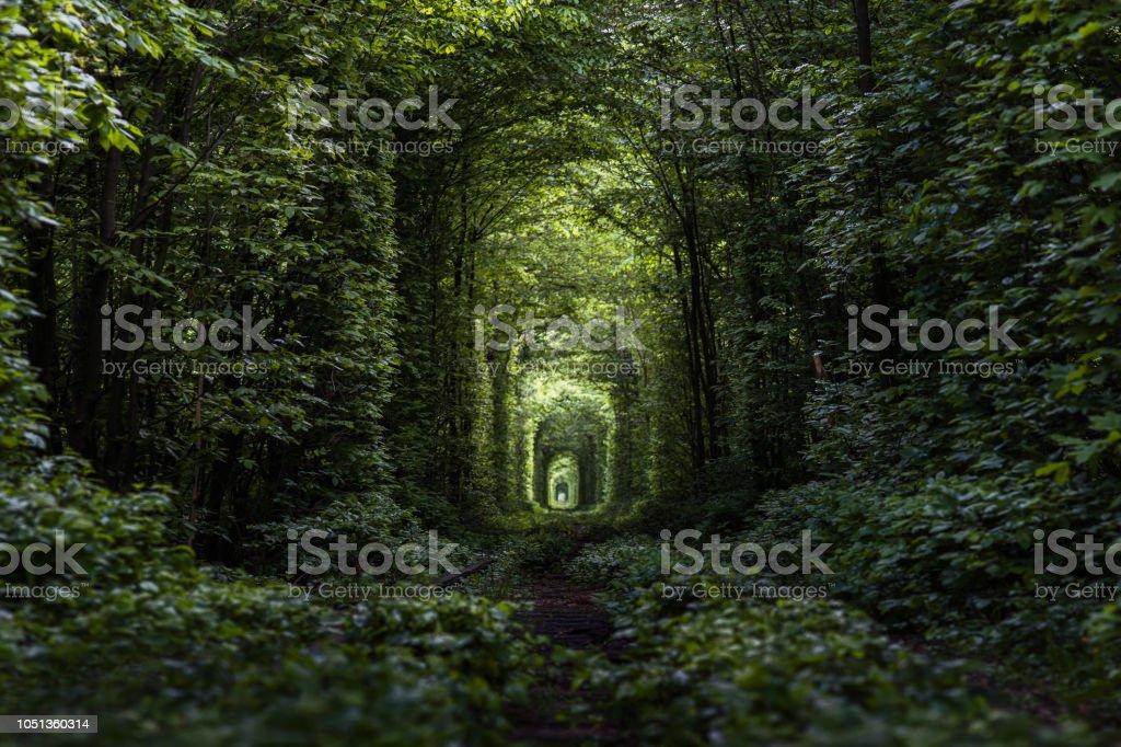 Tunnel de l'amour - Photo