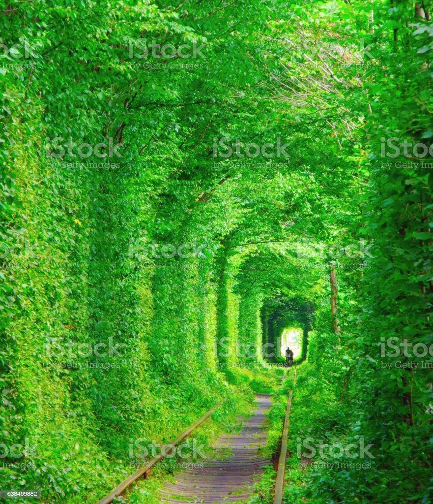 Tunnel of lovers, Ukraine. stock photo