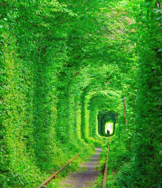 Tunnel of lovers, Ukraine. ストックフォト