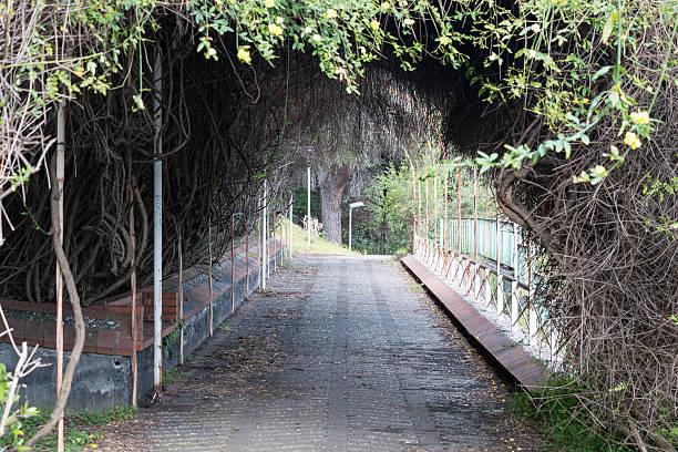 tunnel pflanzen - indoor feen gärten stock-fotos und bilder