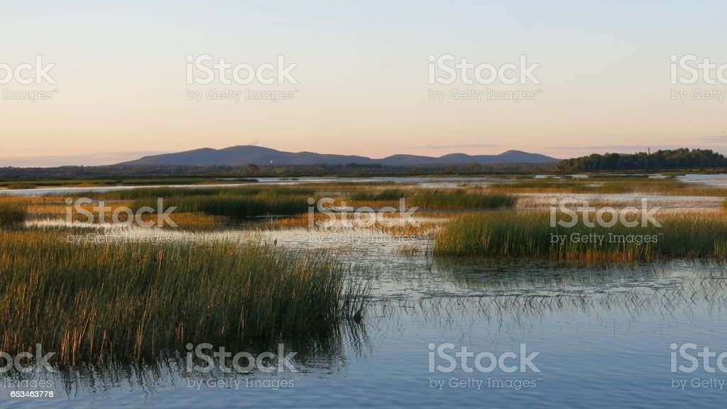 Image result for Lake Weed Removal istock