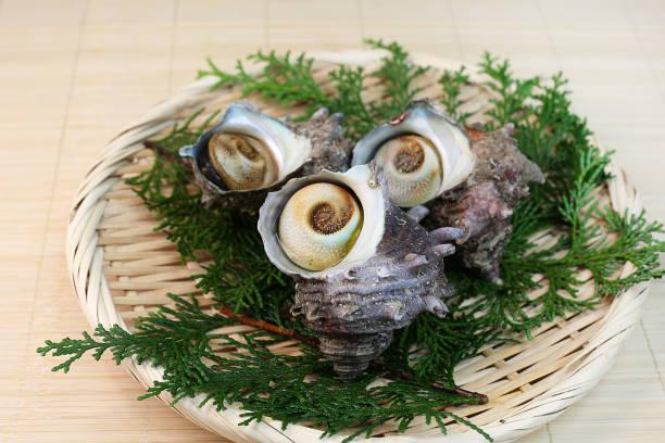 turban shell – Foto