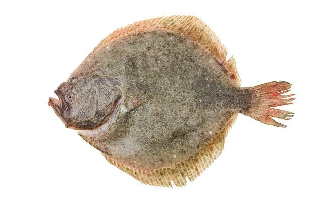 rodaballo pescado - rodaballo fotografías e imágenes de stock