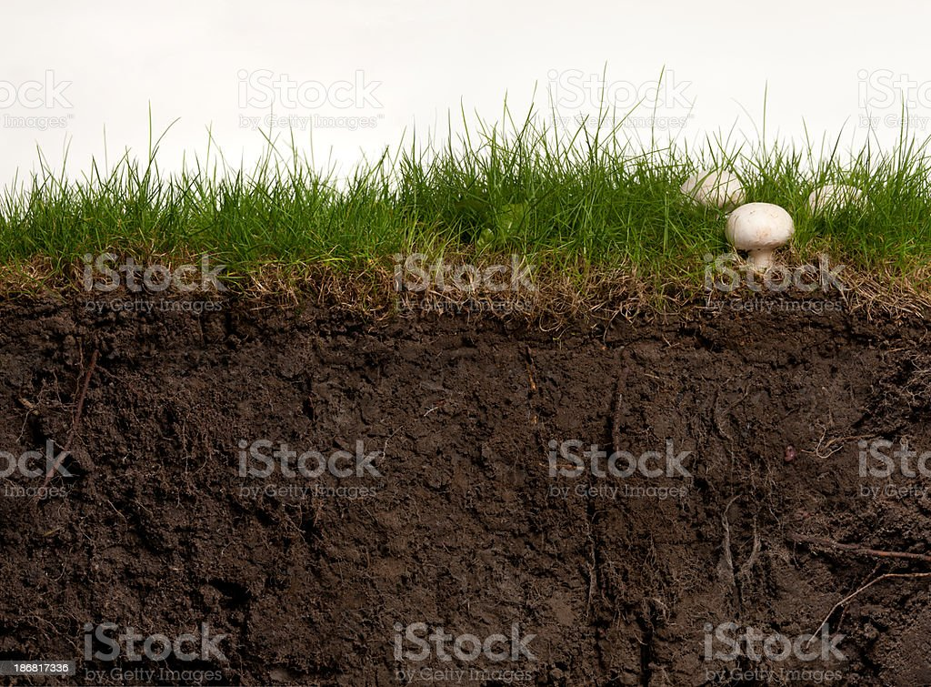 Turf and Earth Cross Section stock photo