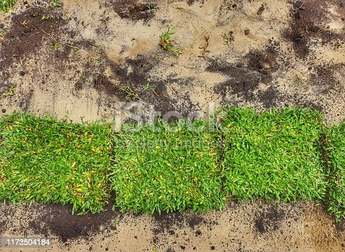 Turf in squre shape on ground in the backyard.The row pieces of green lawn grass on the ground where an area arrange for natural grass installation.