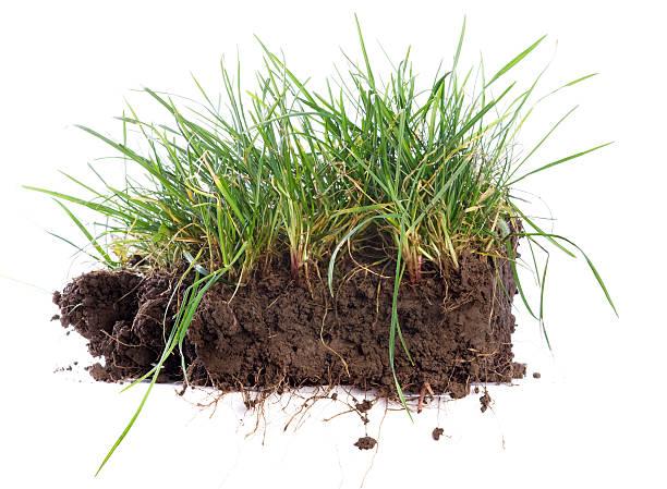 zolla - grass isolated foto e immagini stock