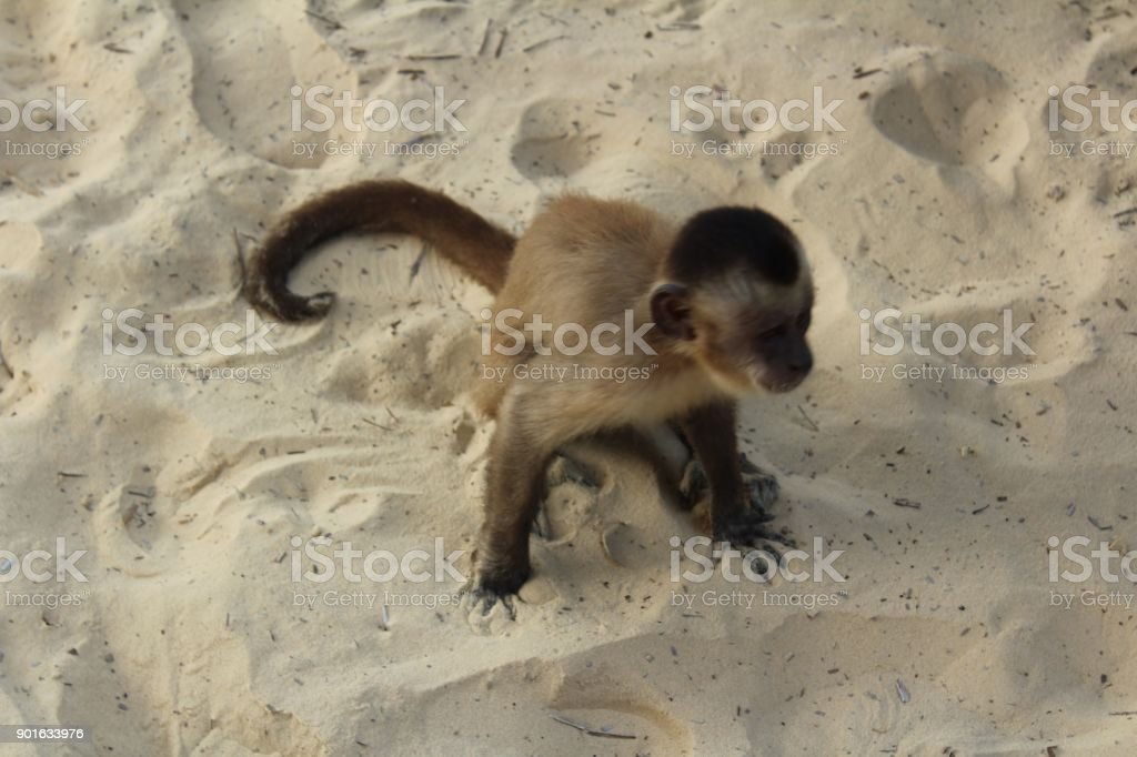 Turism in Northeast Brasil with Sandy Landscape stock photo