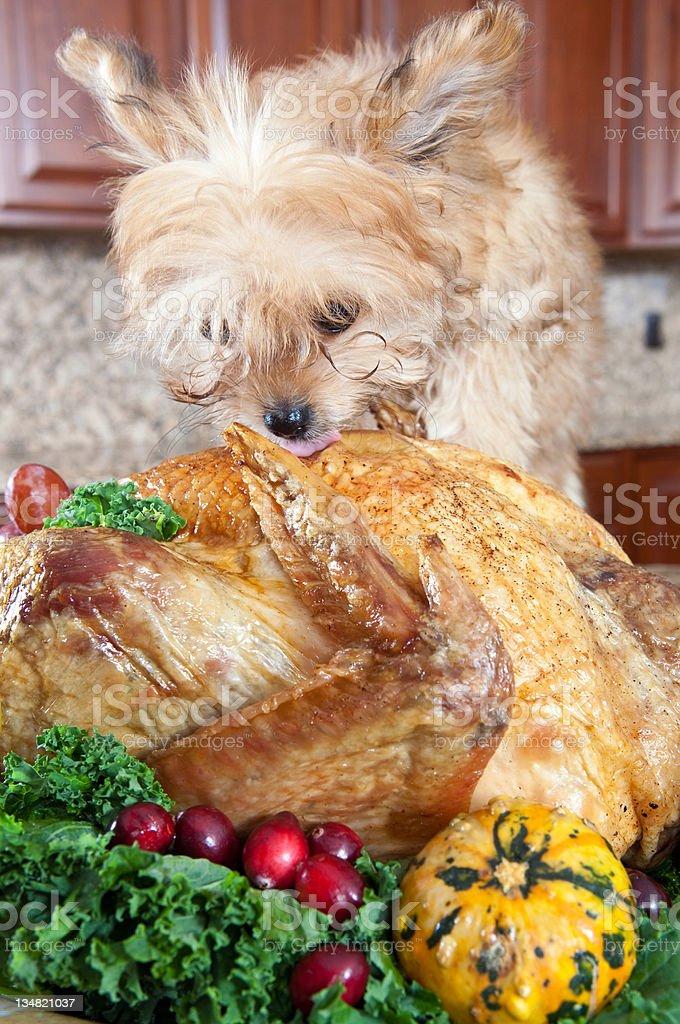 Turkey and dog stock photo