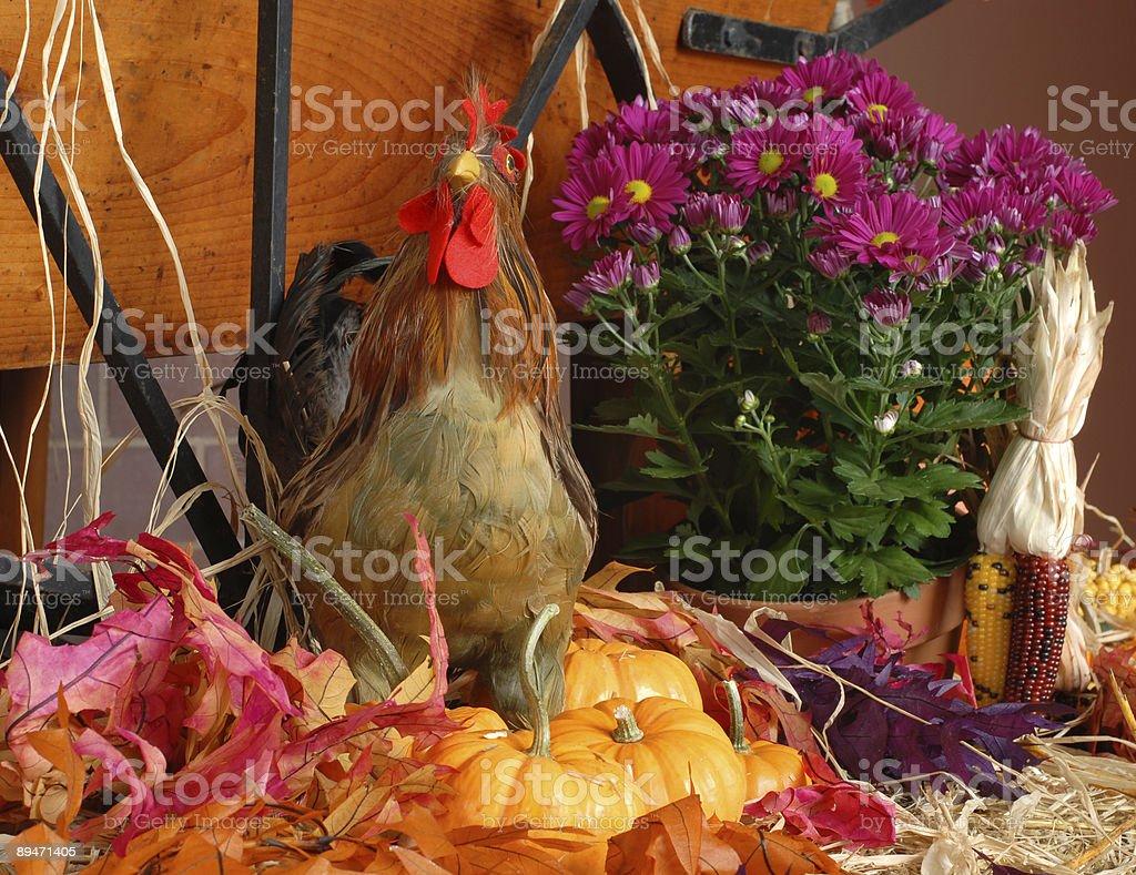 Turquía y Pumpkins I foto de stock libre de derechos