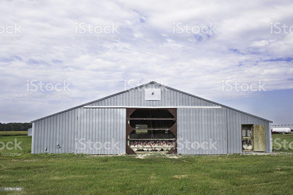 Turkey Farm royalty-free stock photo