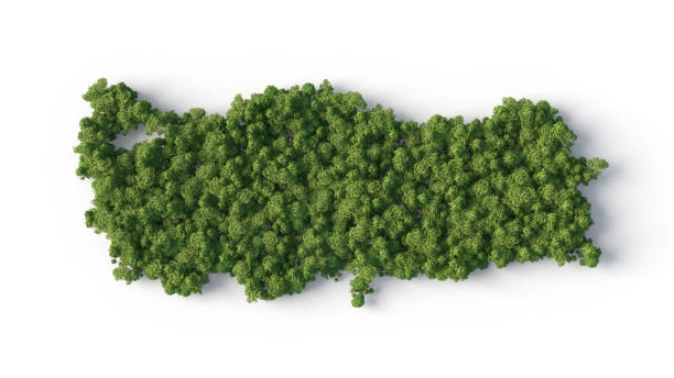 turkey forest shape stock photo