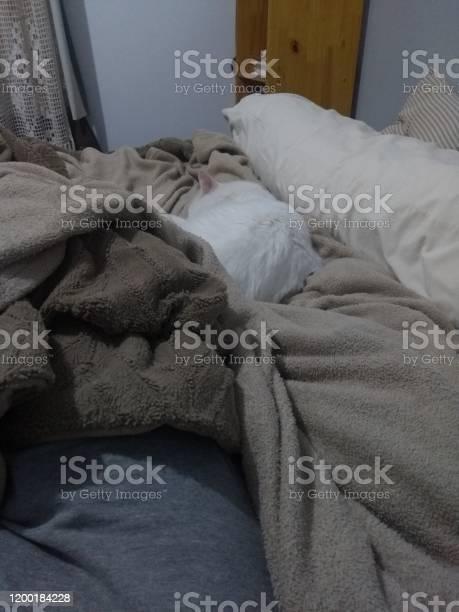 Turkish angora cat picture id1200184228?b=1&k=6&m=1200184228&s=612x612&h=mgsn6q4kev oeizyn jutaowjjvex9ga8sywzy  zjc=