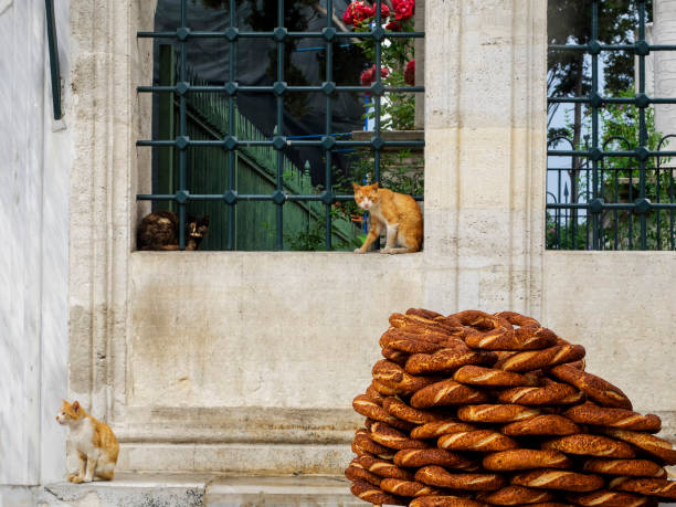 Turkish bagel (simit) and cats in the mosque garden stock photo