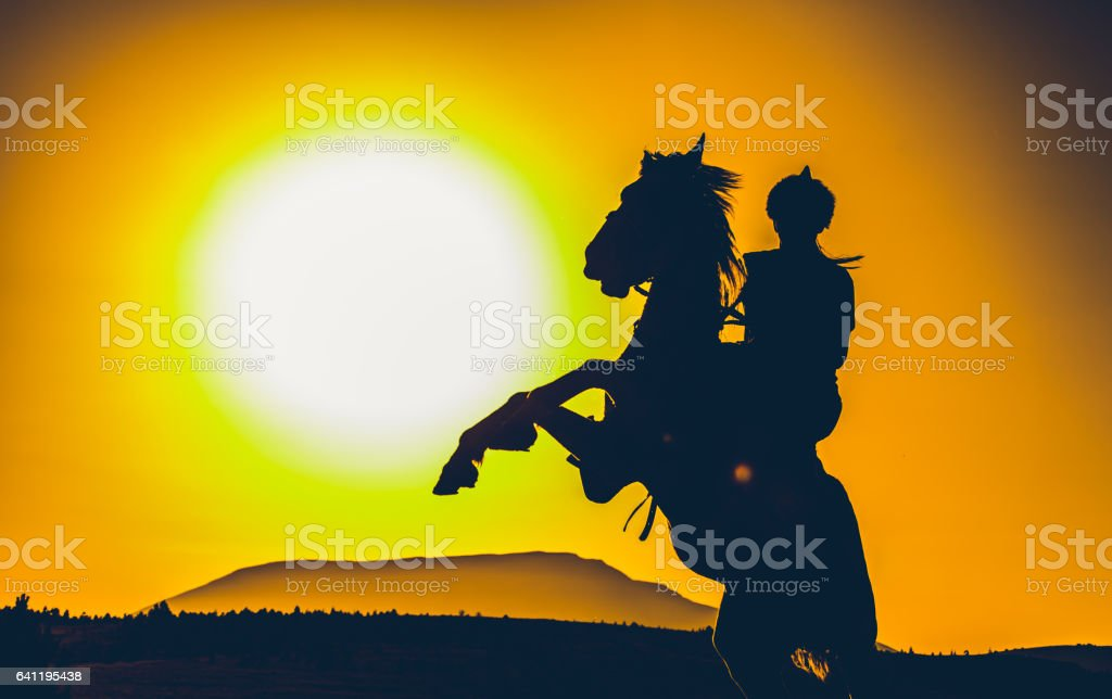 A turkish horse stock photo