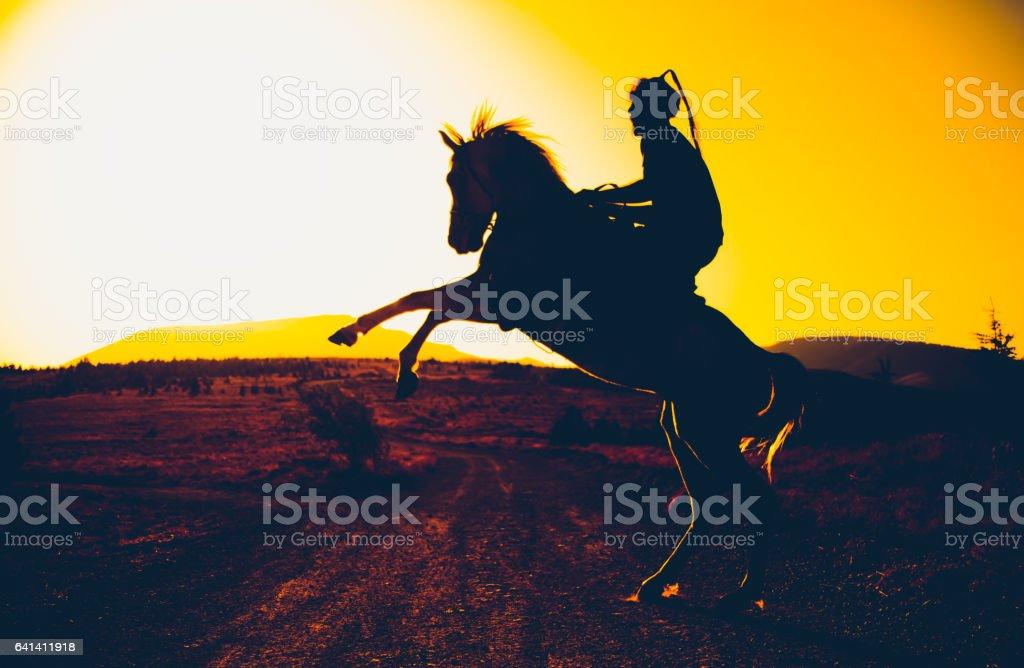 A turkish horse – Foto