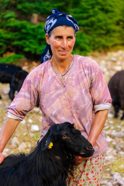 Turkish nomad shepherd woman holding her black goat stock photo