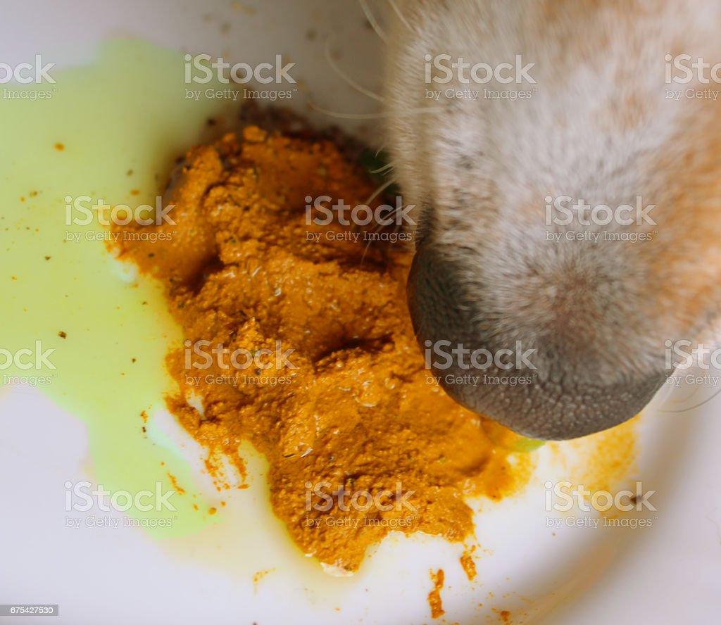 Supplément de chien en bonne santé curcuma pâte dorée photo libre de droits