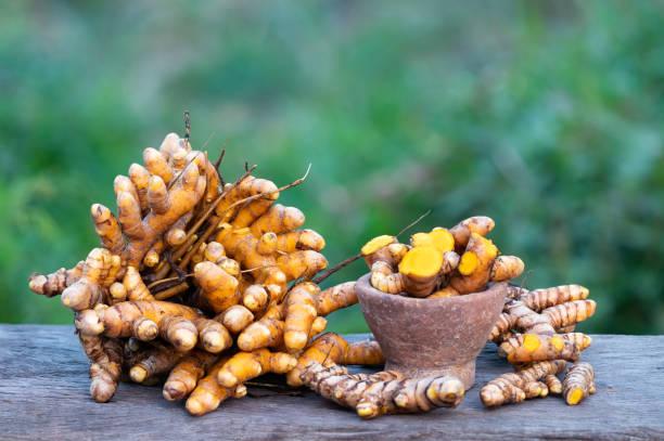 Kurkuma longa, Kräuterpflanze – Foto