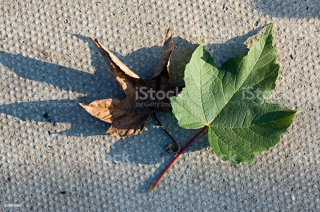 'Turn Over A New Leaf' royalty-free stock photo