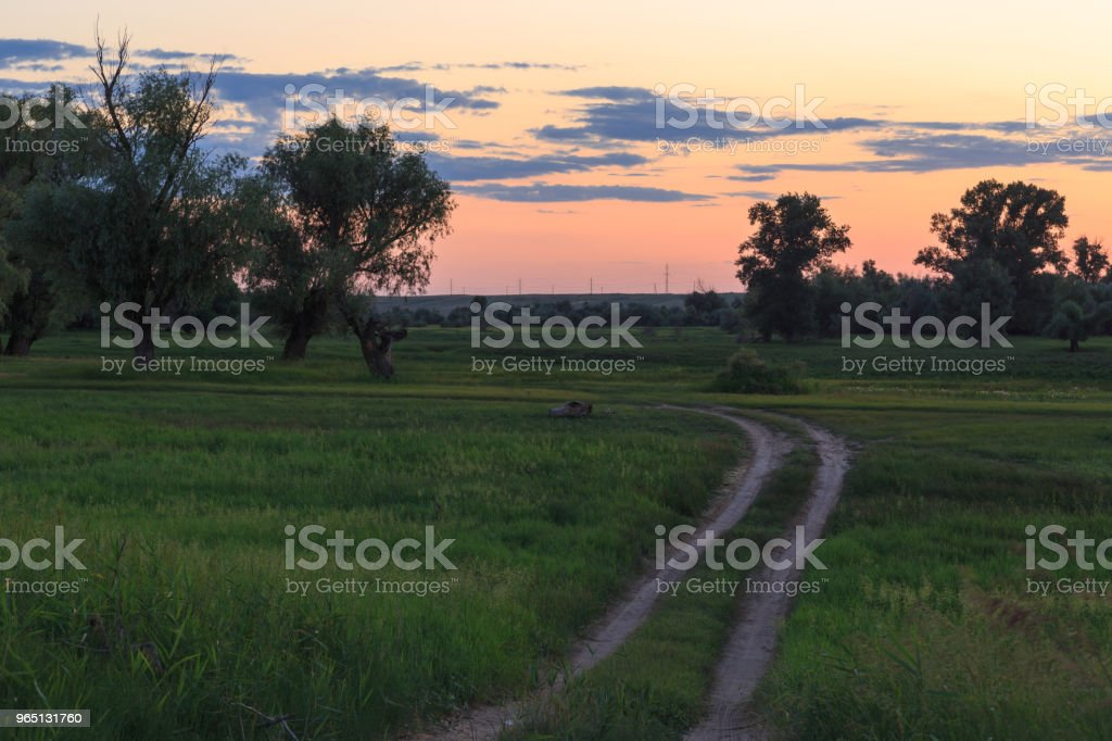 Turn the dirt road into a field between tall trees against the sky after sunset royalty-free stock photo