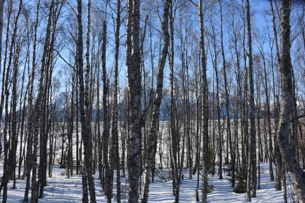 Turnagain Arm Forest – Foto