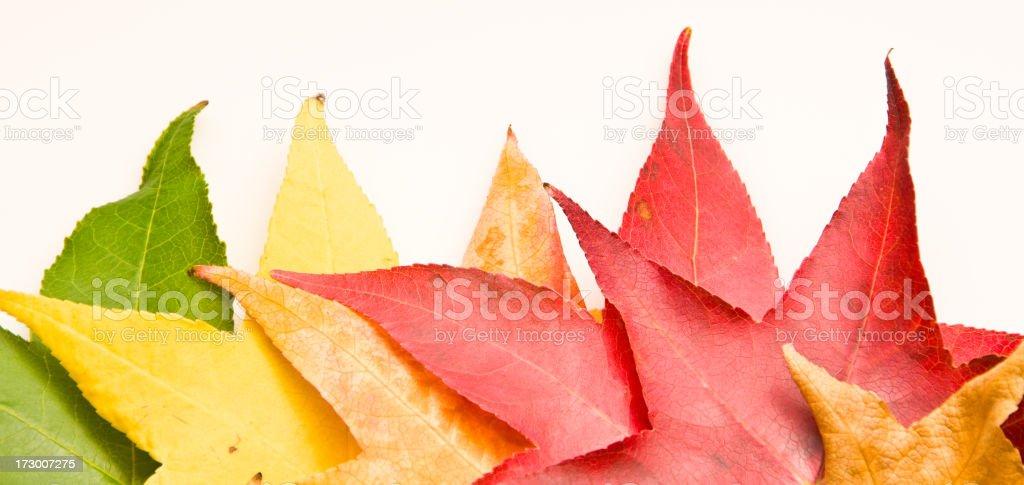 Turning Leaves royalty-free stock photo