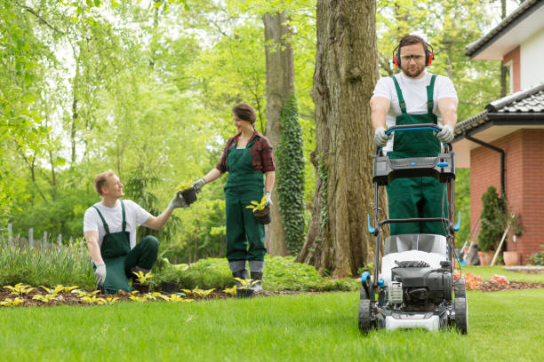 Turning the backyard into a well-kept garden Optimistic team of gardeners planting flowers and mowing lawn mowing stock pictures, royalty-free photos & images
