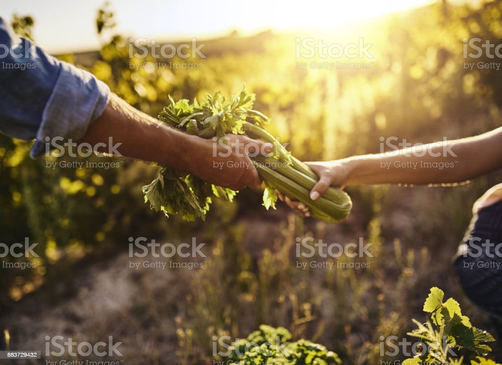 Turning vegetables into a business stock photo