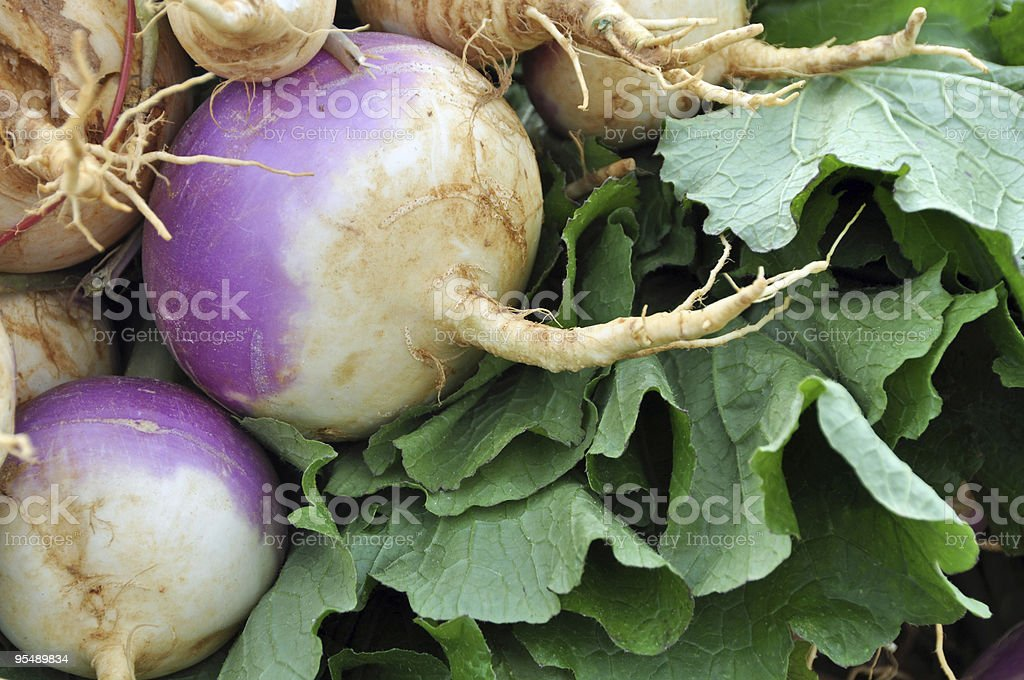 turnip and greens stock photo