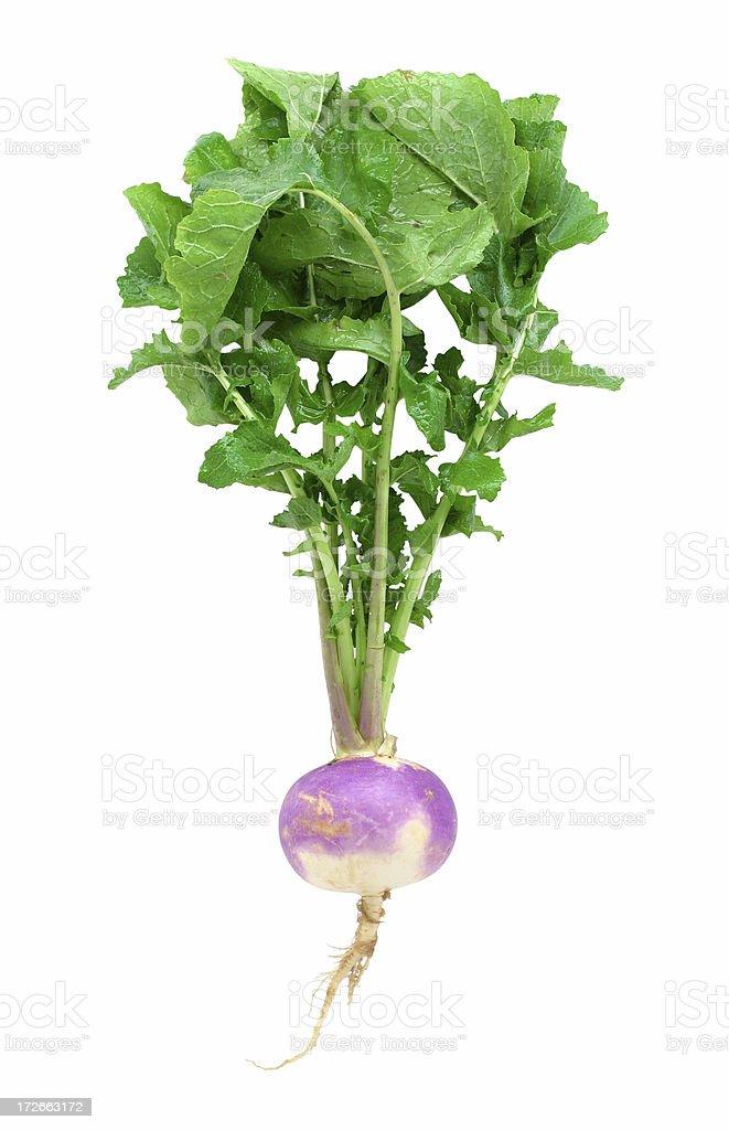 turnip royalty-free stock photo