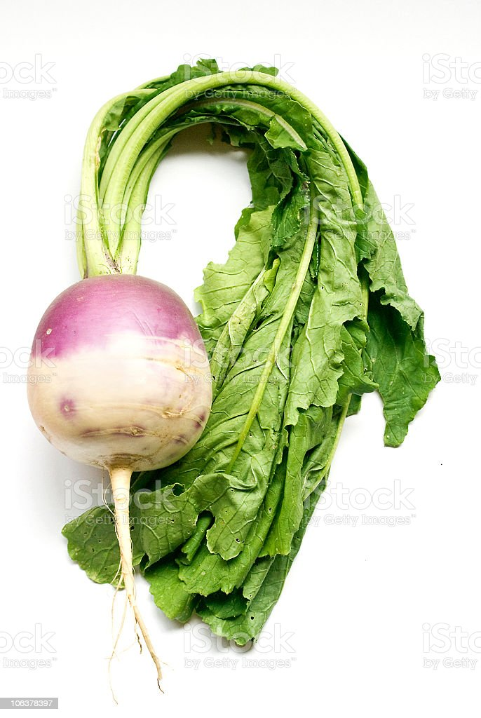 Turnip specimen on white background stock photo