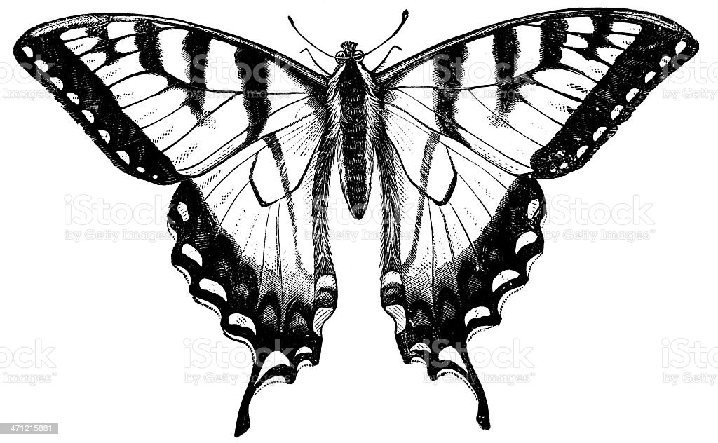 Turnus Swallow-tail stock photo