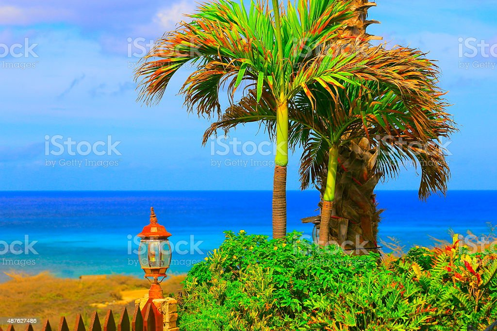 Turquoise beach in Aruba and green palm tree, Antilles stock photo