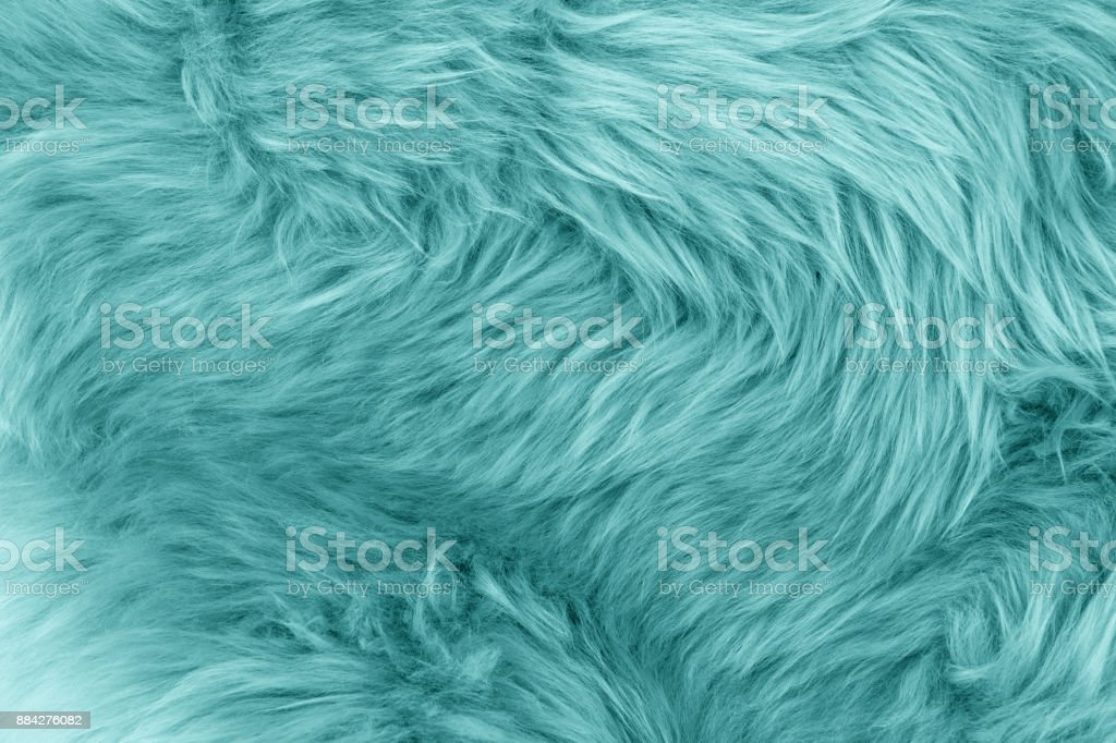 Turquoise Blue Sheepskin Rug Background Stock Photo Download Image Now Istock