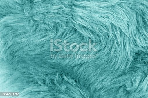Turquoise blue sheepskin rug background. Wool texture. Close up sheep fur