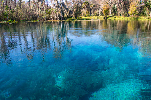 Silver Springs is one of Florida's most treasured landscapes. As one of the largest artesian springs ever discovered, people have long been captured by the spring's natural beauty and vibrant clarity. Ocala, Florida. Gulf Coast States.