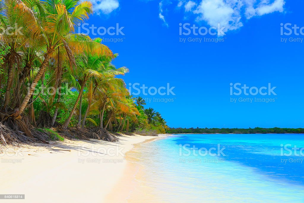 Turquoise bright beach, palm trees –  Punta Cana caribbean tropical paradise stock photo