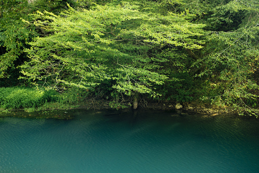 istock Turquoise lake in Abkhazia 922766332