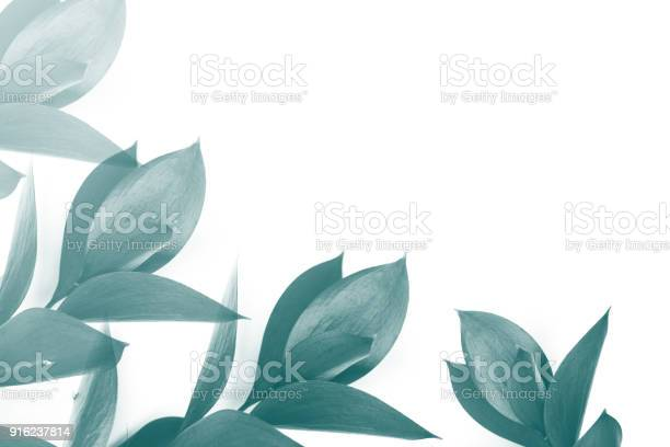 Turquoise leaves on twigs isolated on white picture id916237814?b=1&k=6&m=916237814&s=612x612&h=dw e1 4lz7tkv 3be1kcjiuekjqgrjshmlkemp5tvl8=